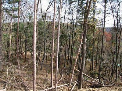 Westmoreland County Residential Lots & Land For Sale: Lot # 13 2207 Gilgit Ct
