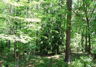 Aiken Residential Lots & Land For Sale: Wrights Mill Road