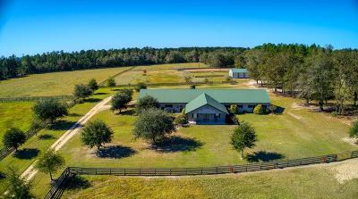 Aiken Single Family Home For Sale: 490 Big Tree Road