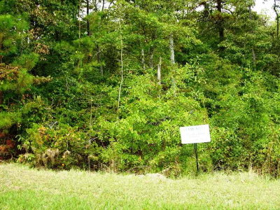 Aiken County Residential Lots & Land For Sale: Lot 26 Eve Street