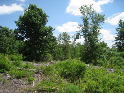 Warrenville Residential Lots & Land For Sale: 661 Brier Patch Lane