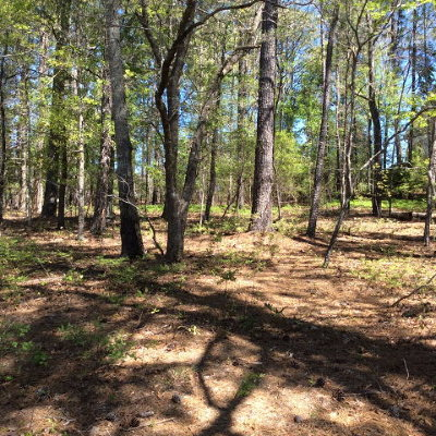 Aiken Residential Lots & Land For Sale: 60 Chinkipin Court