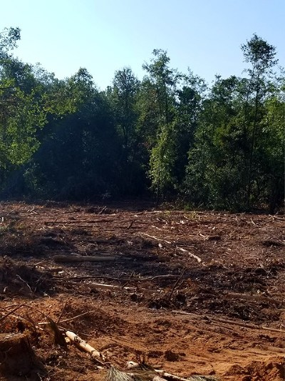 New Ellenton Residential Lots & Land For Sale: Lot16/18 Madison Ave