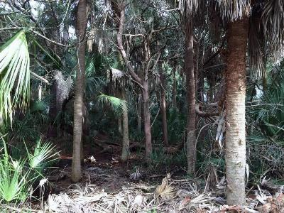 Fripp Island Residential Lots & Land For Sale: 7 Fiddlers Bend