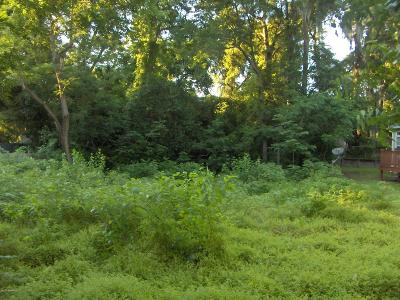 Ridgeland Residential Lots & Land For Sale: Holly Street