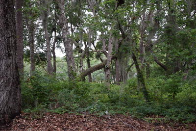 Dataw Island Residential Lots & Land For Sale: 326 Westbrook Road