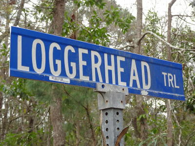 Residential Lots & Land For Sale: 6 Loggerhead Trail