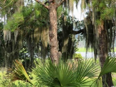 Beaufort, Beaufort Sc, Beaufot, Beufort Residential Lots & Land For Sale: 6 Lady Elizabeth Drive