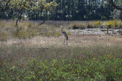 Fripp Island Residential Lots & Land For Sale: 354 Blue Gill Road