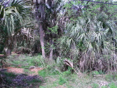 Fripp Island Residential Lots & Land For Sale: 638 Dolphin Road