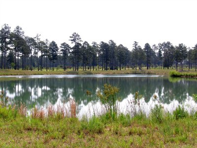 Richland County, Kershaw County, Lexington County Residential Lots & Land For Sale: 540 Swift Creek
