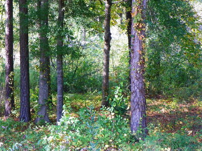 Greenwood County Residential Lots & Land For Sale: 433 Dogwood Dr