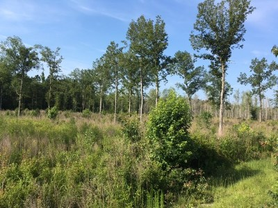 Kingstree Residential Lots & Land For Sale: Cade Rd