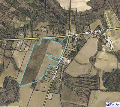 Effingham, Darlington, Darlinton, Florence, Flrorence, Marion, Pamplico, Timmonsville Residential Lots & Land For Sale: 36.61 Acres Potato House Road