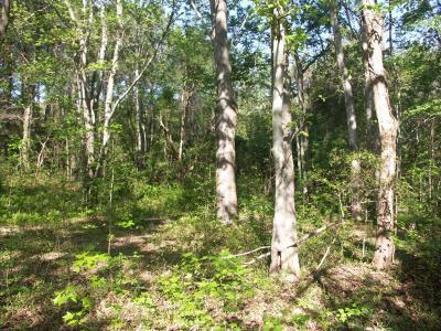 Edisto Island SC Residential Lots & Land For Sale: $47,800