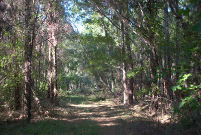 Wadmalaw Island Residential Lots & Land For Sale: 2040 Bentz Road