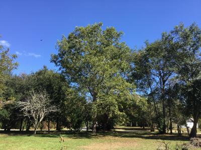 Residential Lots & Land For Sale: 1572 Periwinkle Drive