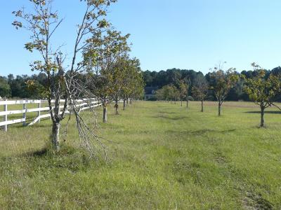 Awendaw Residential Lots & Land Contingent: 4925 Seewee Road