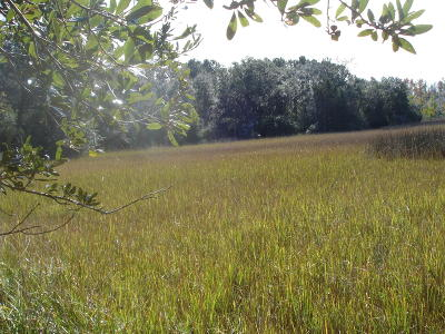 Johns Island Residential Lots & Land For Sale: 1125 Hughes Rd.