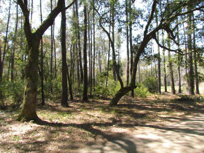 Residential Lots & Land For Sale: Palmetto Pointe Road #7-3