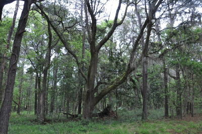 Johns Island Residential Lots & Land For Sale: 4150 Gnarled Oaks Lane
