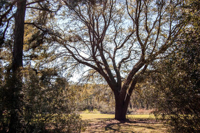 Edisto Island SC Residential Lots & Land For Sale: $72,000