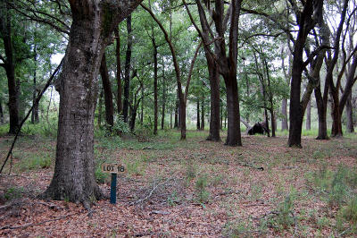 Edisto Island SC Residential Lots & Land For Sale: $85,500