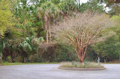 Kiawah Island Residential Lots & Land For Sale: 24 Marsh Wren Court