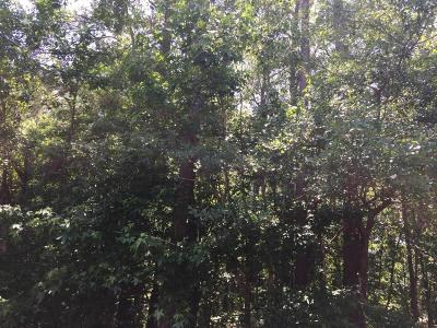 Edisto Island SC Residential Lots & Land For Sale: $45,000