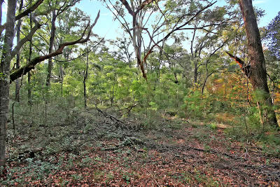 Edisto Island SC Residential Lots & Land For Sale: $49,000