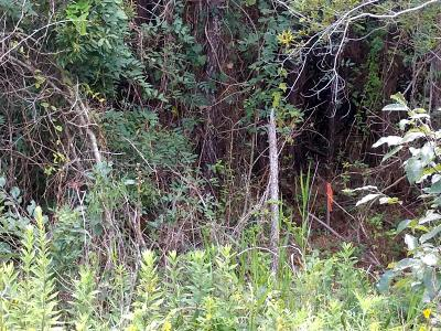 Residential Lots & Land For Sale: 1593 Boston Grill Road