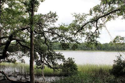 Johns Island Residential Lots & Land Contingent: 6056 Chisolm Road