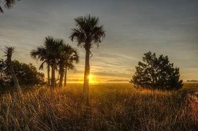 Berkeley County, Charleston County Residential Lots & Land For Sale: 141 Nobels Point