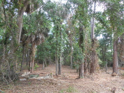 Edisto Beach SC Residential Lots & Land For Sale: $210,000