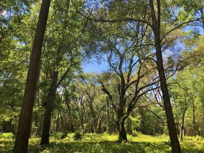 Edisto Island SC Residential Lots & Land For Sale: $44,500
