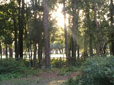 Residential Lots & Land Contingent: 473 Woodland Shores Road