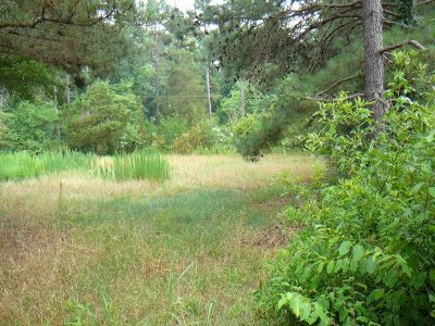 Townville Residential Lots & Land For Sale: 307 Cole Road