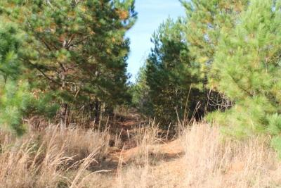 Anderson County Residential Lots & Land For Sale: 00 N Major Road