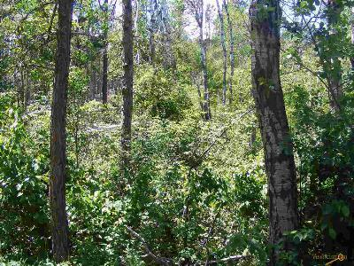 Residential Lots & Land For Sale: 23235 S Prairie Creek Rd