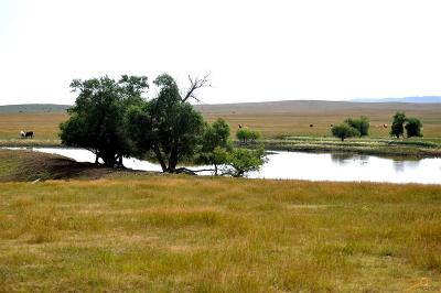 Sturgis Farm & Ranch For Sale: 21017 Elk Vale Rd