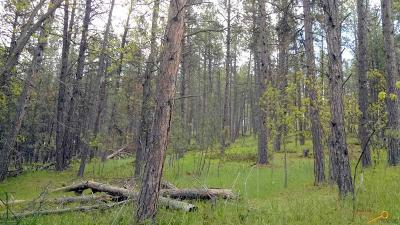Sturgis Residential Lots & Land For Sale: Berry Lane Boulder Canyon