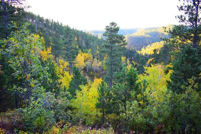 Deadwood, Lead Residential Lots & Land For Sale: Paris Lode