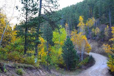Deadwood, Lead Residential Lots & Land For Sale: Tract 1 Palmeto