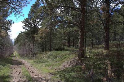 Deadwood, Lead Residential Lots & Land For Sale: Tract F Last Chance