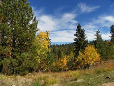 Lead SD Residential Lots & Land For Sale: $53,000