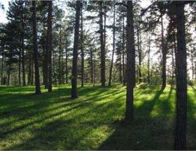 Pennington County Residential Lots & Land For Sale: 23639 Wilderness Canyon