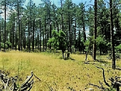 Sturgis Residential Lots & Land For Sale: Red Cliff
