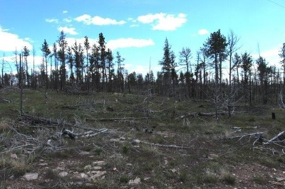 Custer Residential Lots & Land For Sale: Lot 4 Midnight Drive