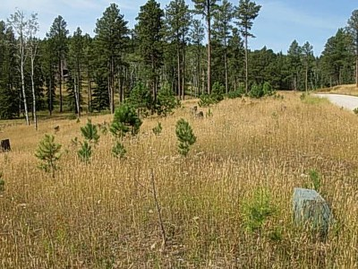 Deadwood, Lead Residential Lots & Land For Sale: Lot 23 Bogey Circle