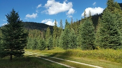 Deadwood, Lead Residential Lots & Land For Sale: Fn 84 Highway 14a